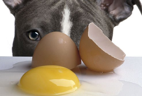 Can A Dog Die From Eating A Raw Egg